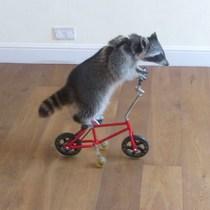 動物都識踩單車!一齊睇睇寵物點踩單車!